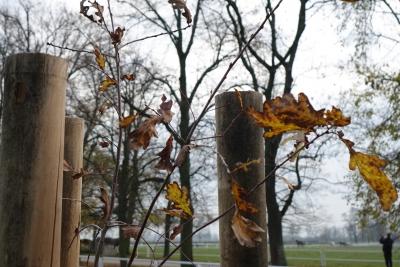 100 drzew już rośnie